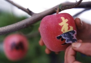 FruitParlor12
